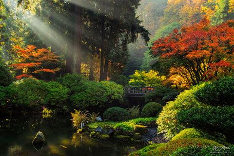 Japanese Garden Rays