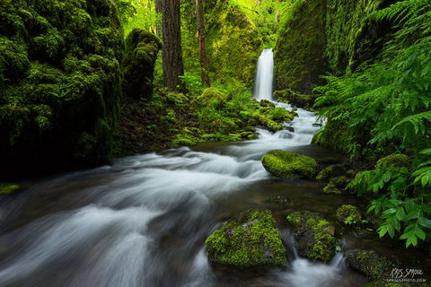 Mossy Grotto Flow
