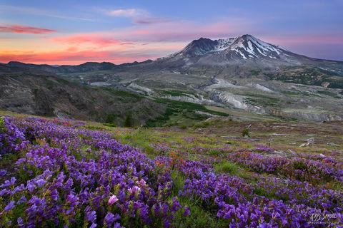 Mount St. Helens Rebirth