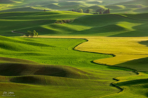 Spring Evening on the Palouse